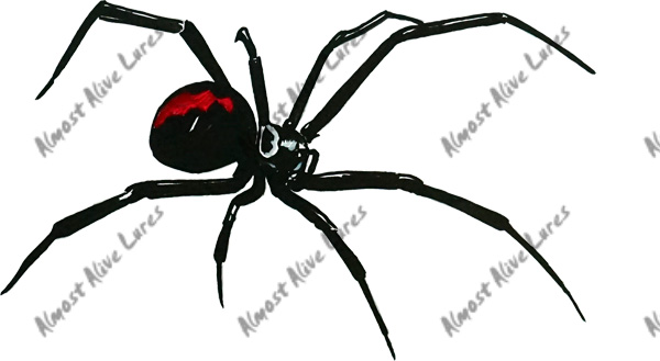 Black Widow Spider Decal