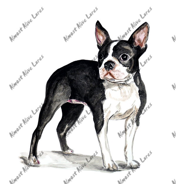 Vinyl Decal (Made in USA) Boston Terrier