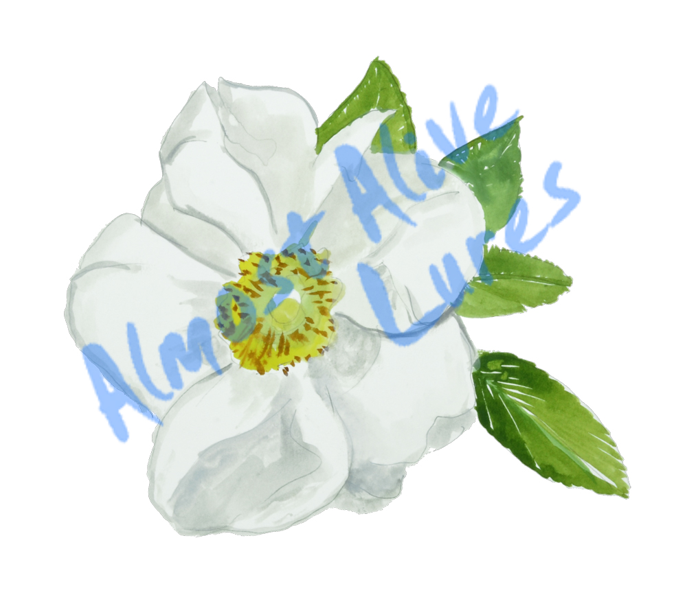 Vinyl Decal (Made in USA) Cherokee Rose STK646L
