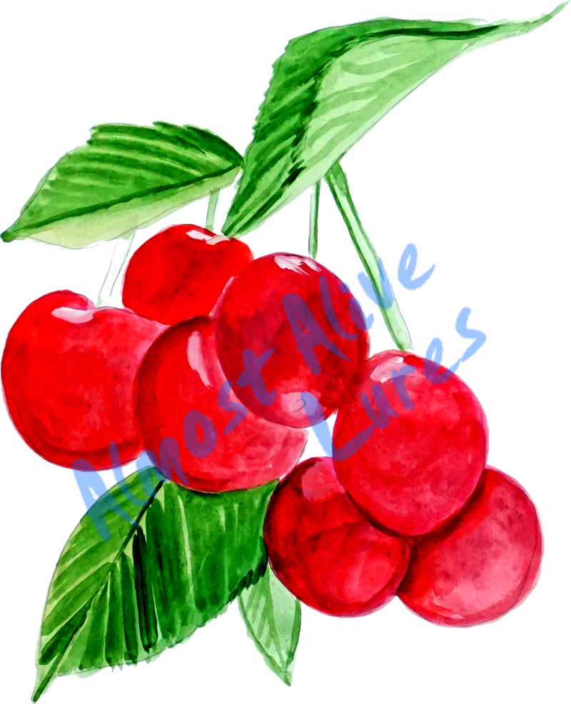 Vinyl Decal (Made in USA) Cherries