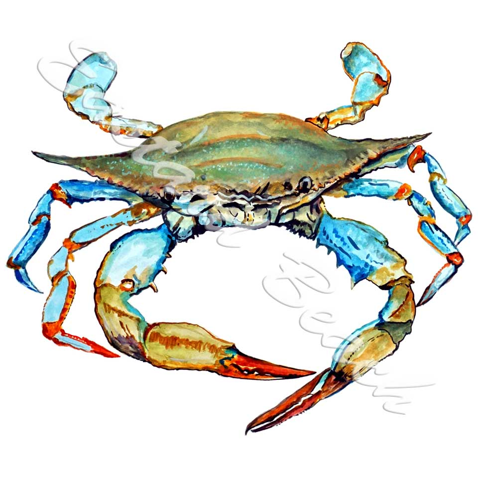 Blue Crab 2 STK975L