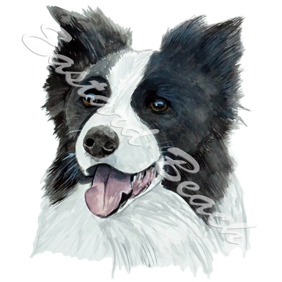 Vinyl Decal (Made in USA) Border Collie
