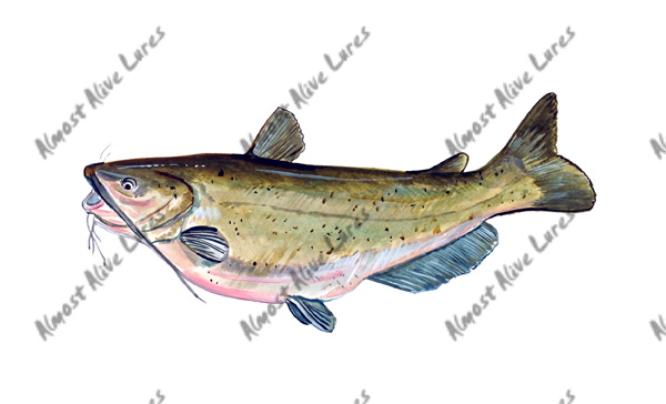 Fish Decal - Channel Catfish