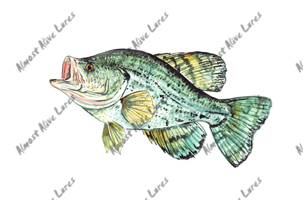 Fish Decal - Crappie