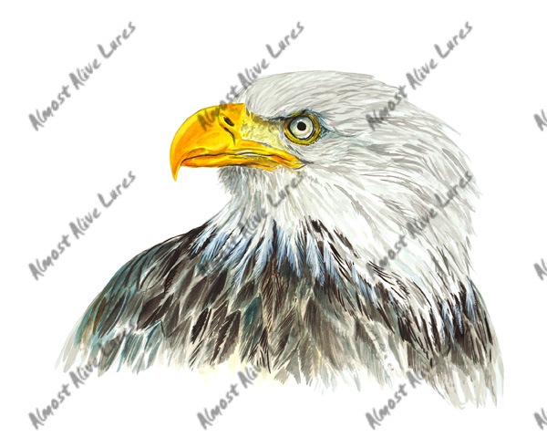 Bird Decal - Eagle Large Decal--6.721x5.085