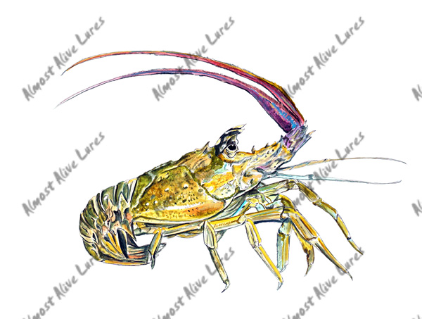 Fish Decal - Lobster