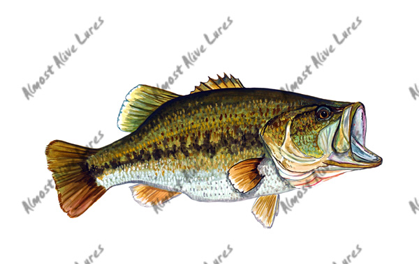 Fish Decal - Large Mouth Bass