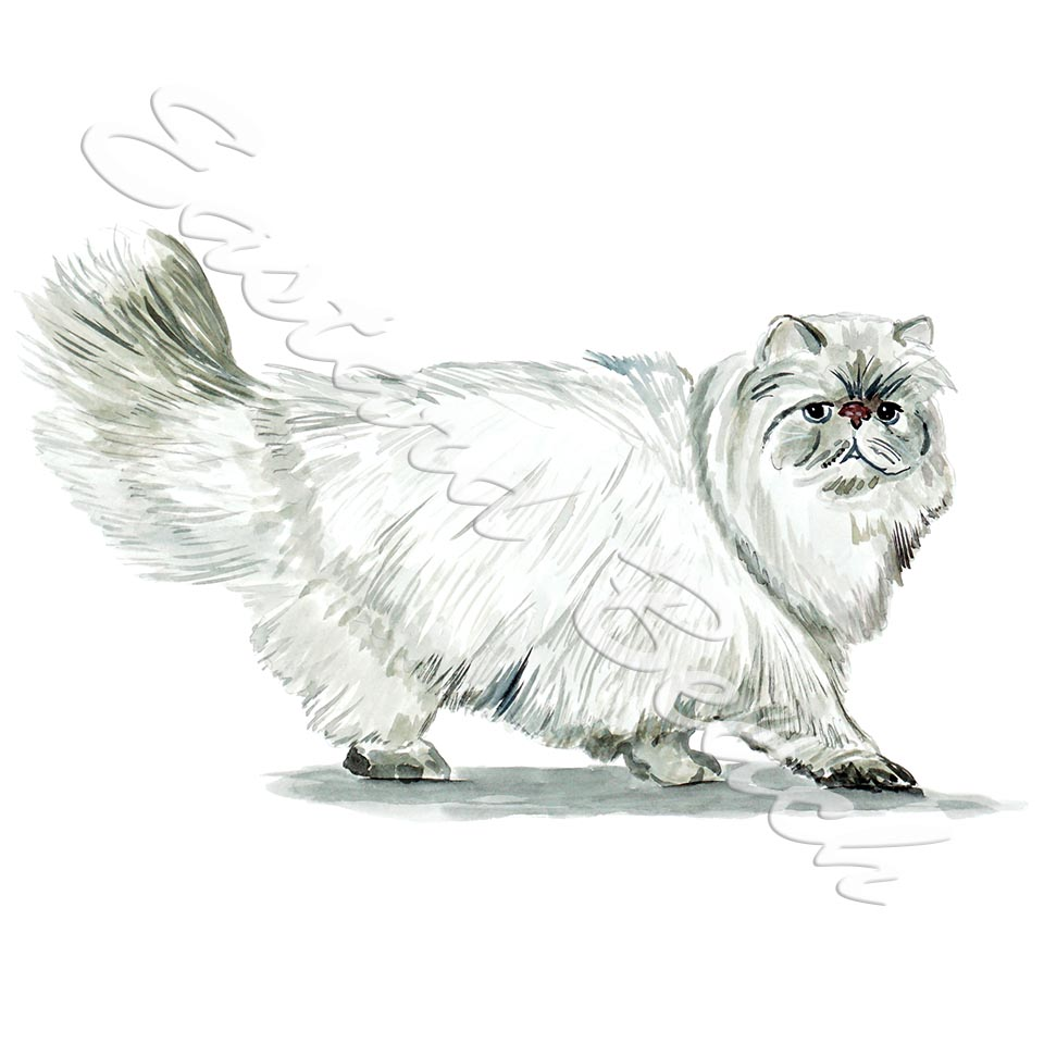 Persian Cat STK776L