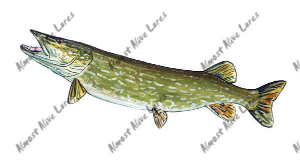 Fish Decal - Northern Pike