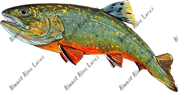 Fish Decal - Brook Trout