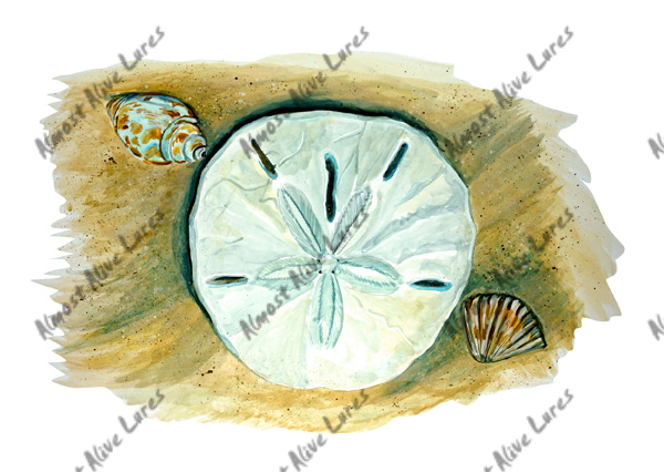 Beach Decals - Sand Dollar