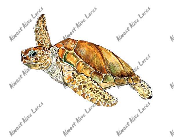 Fish Decal - Sea Turtle