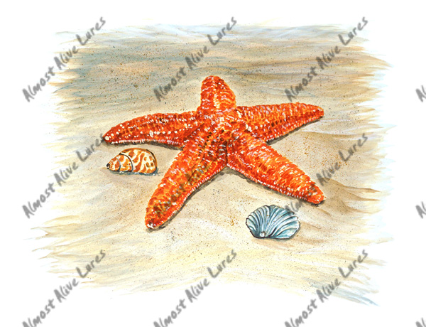 Beach Decals - Starfish