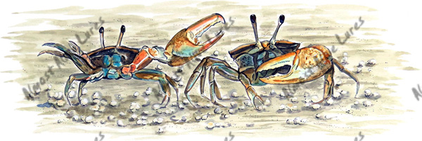 Fish Decal - Fiddler Crab